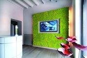 Вертикальное озеленение,  Фитостена,  Фитомодуль от Green Tree